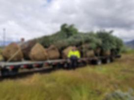 Tree Transport.jpg