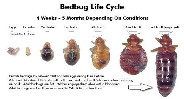 5 Best Methods to Stop Bed Bug Bites Imm