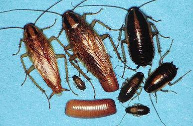 gerroa.jpg