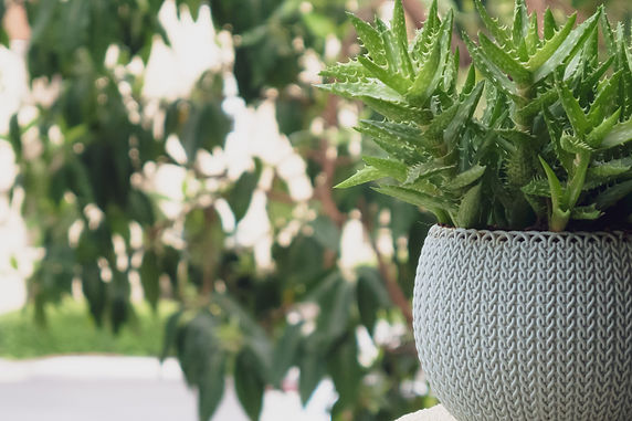 Getting Started With Potted Plants