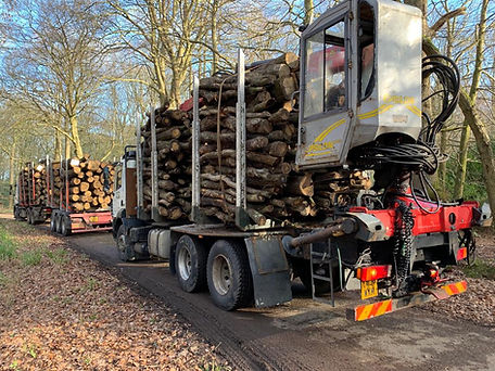 Forestry operations 2