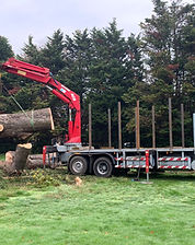 Timber extraction and haulage