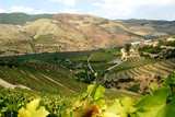 Sogevinus Fine Wines 5.jpg
