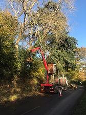 Mechanical Tree Dismantling