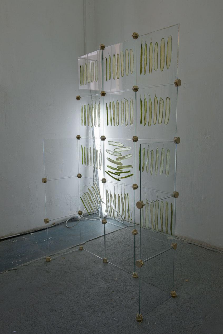 Cucumber Wall, 2014