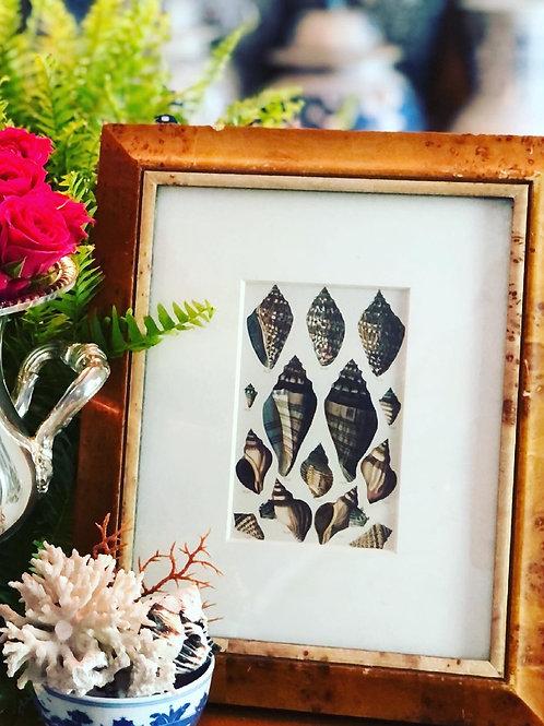 Seashell print in burlwood frame