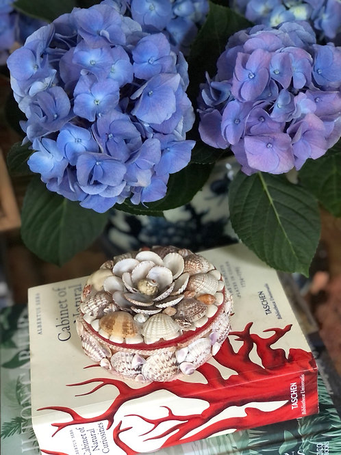 Vintage seashell round box