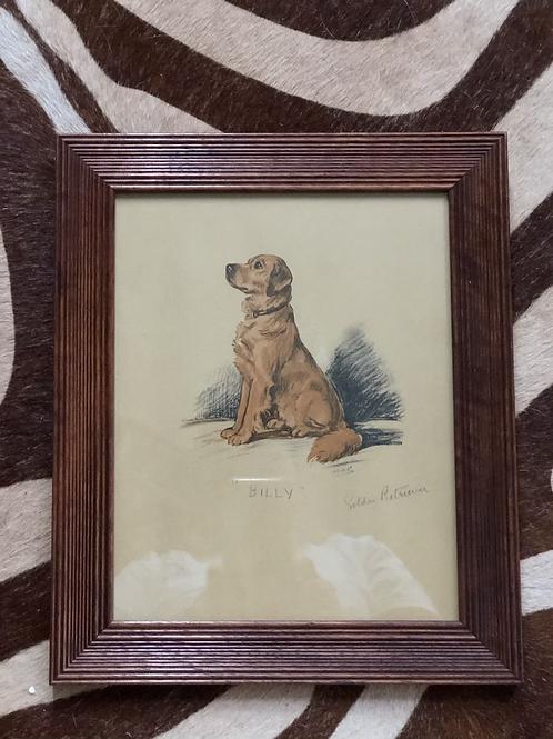 Billy the Golden framed print