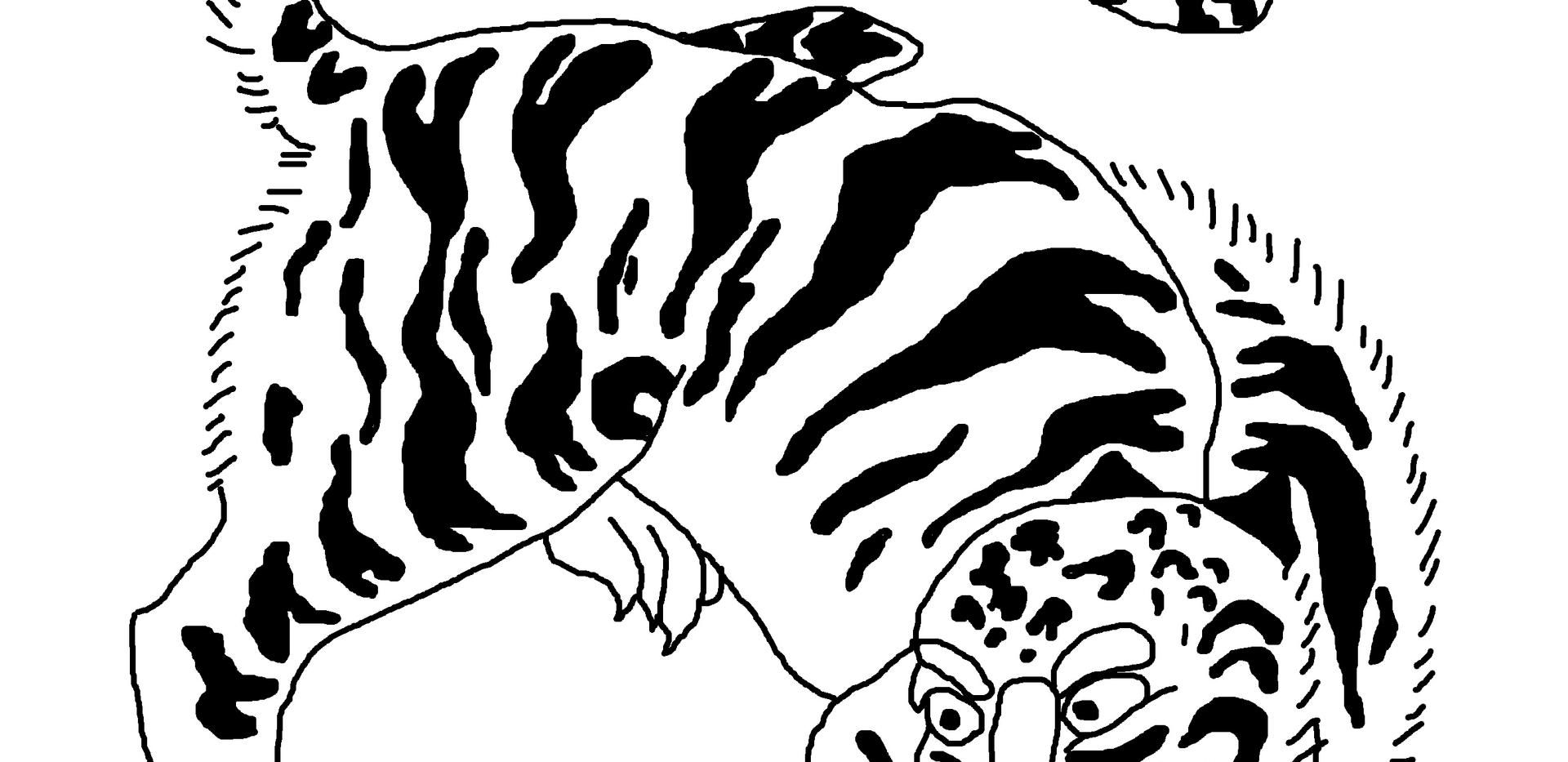 tigre 1.png