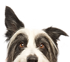 Medical Alert Service Dogs - Compass Key