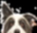 Peeping Dog