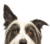 Our primary service is off leash group dog walking outings on monthly plans.