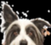 Dog training calgary