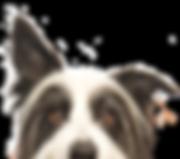Peeping Hund