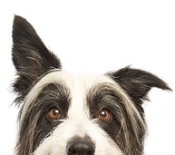 dog_pup_puppy_happyDog_holisticDog_shaggyDog