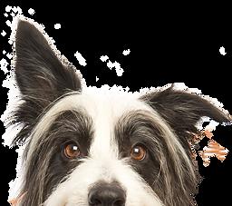 覗き見する犬の顔