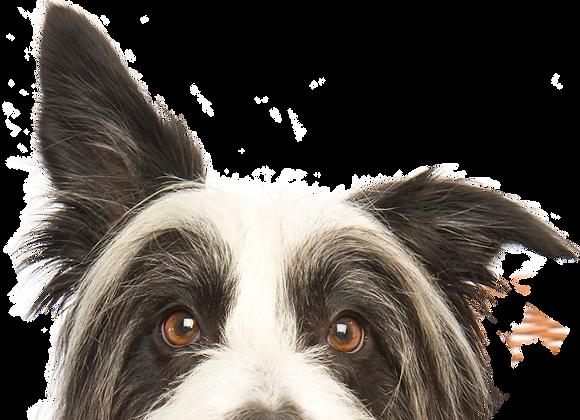 Dog Rescue Yoga Event