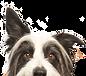 dog-supplements-1.jpg