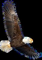 eagle100.png
