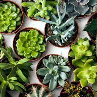 Ways To Avoid Killing Your Succulents After Your Plant and Wine Down Event