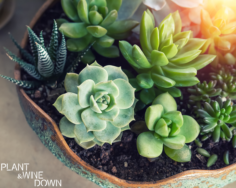 Terrarium and Succulent Maintenance & Care