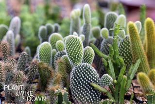 CACTUS CRUSH: 5 Reasons To Love Cactus & Make Your Own Cactus Terrarium
