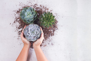 HOW TO TRANSFER YOUR PLANT & WINE DOWN SUCCULENTS AND CACTI TO A POT