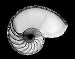Nautilus1_edited.png