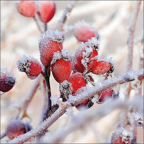 Snowy Berry Napkin
