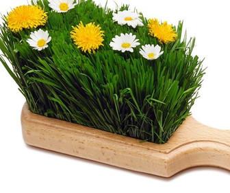 Frühjahrsputz ganz biologisch (Teil 1)