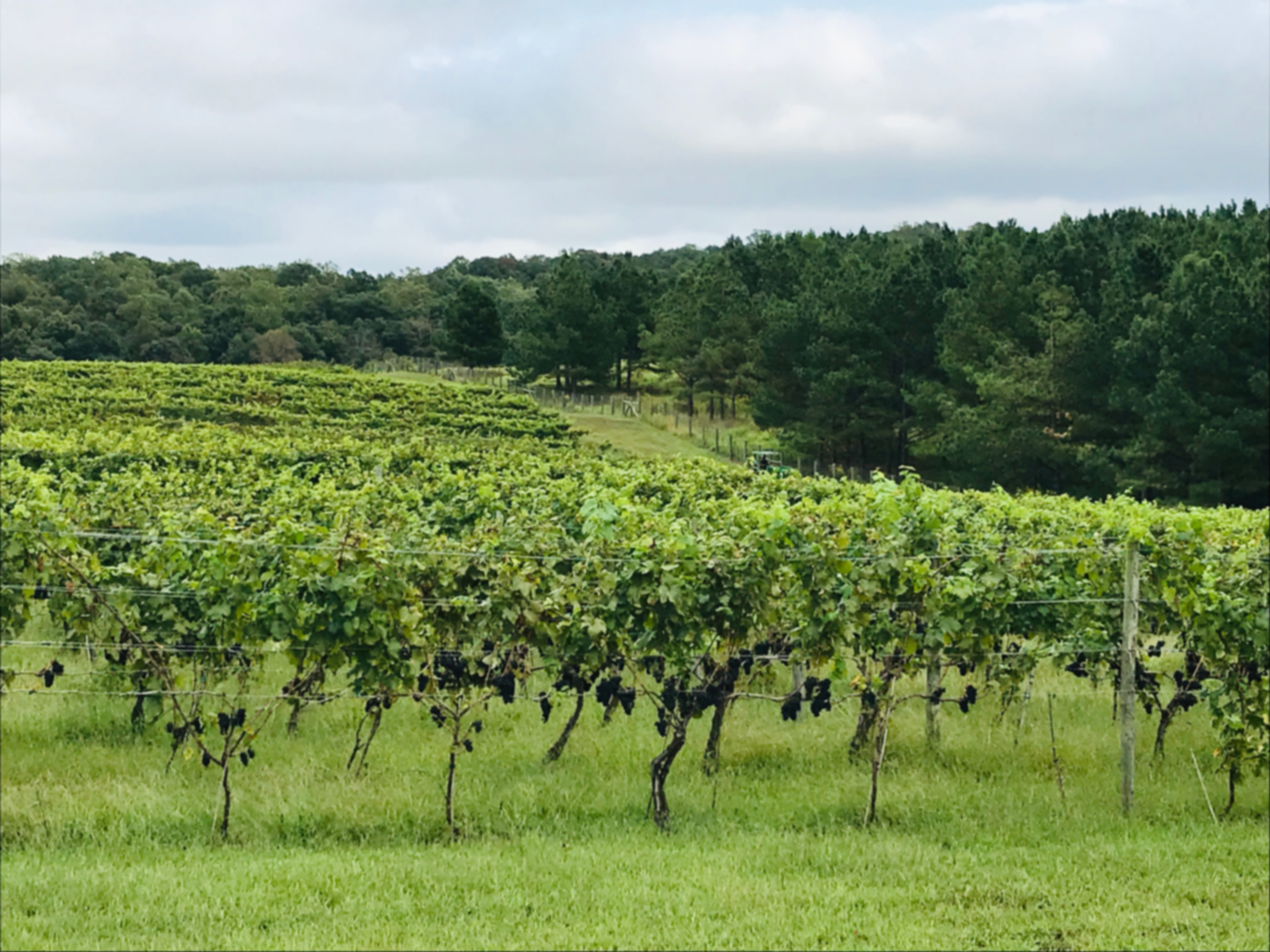 Blue Valley Winery Vineyard wine vines Virginia countryside wine tasting tour