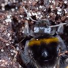 Pollinators.png
