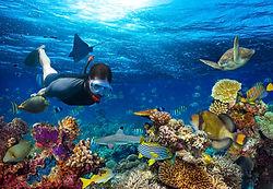MALDIVES SNORKELING iStock-647358754.jpg