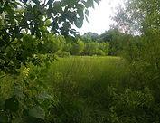 Brown_Springs_the_springs-978x751.jpg