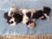 cachorros Rita