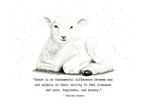 Lamb Watercolour with Darwin Quote