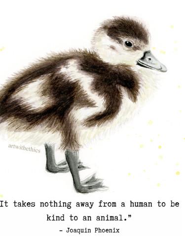 ducklingjoaquinw.jpg