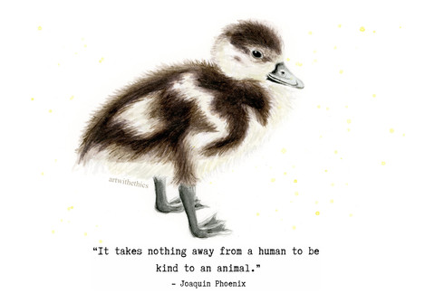 Duckling Watercolour with Joaquin Phoenix Quote