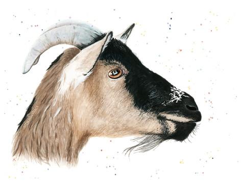 Goat Watercolour Portrait