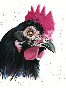 chickenw.jpg