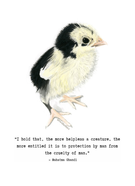 Chick in Watercolour and Ink with Ghandi Quote