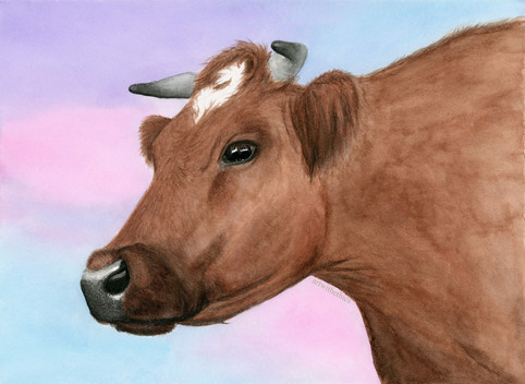 Cow Watercolour Portrait