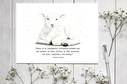 Lamb Watercolour Print with quote by Charles Darwin. Vegan Nursery Decor