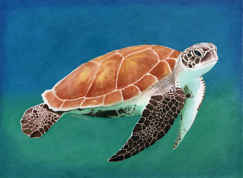 Turtle in Watercolour & Coloured Pencil