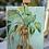 Thumbnail: Palm breeze