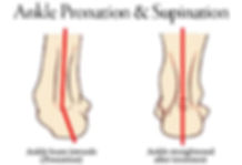Ankle pronation & supination.jpg