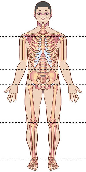 Ideal body alignment - LoRes.jpg