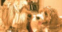 Sam & Sophie _Los regalones de la casa 💝 _Sabias que los labradoodles tienen la combinación perfect