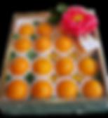 1590-orange-navel.png