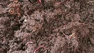 Vermi Compost 20L